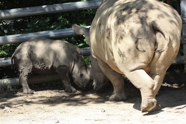 Zoo_Dortmund_190714_copy_Heike_Weiler_IMG_2594