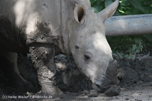 Zoo_Dortmund_190714_copy_Heike_Weiler_IMG_2605