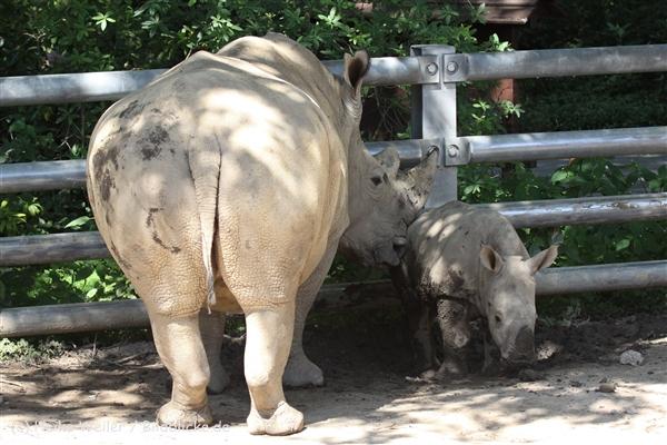 Zoo_Dortmund_190714_copy_Heike_Weiler_IMG_2617