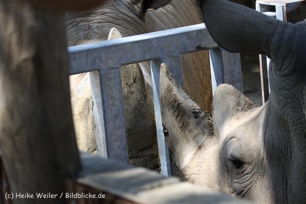Zoo_Dortmund_190714_copy_Heike_Weiler_IMG_2636