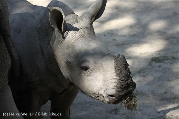 Zoo_Dortmund_190714_copy_Heike_Weiler_IMG_2637
