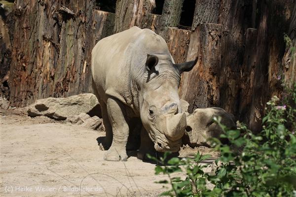 Zoo_Dortmund_190714_copy_Heike_Weiler_IMG_2646