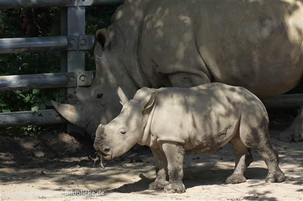 Zoo_Dortmund_190714_copy_Heike_Weiler_IMG_2663