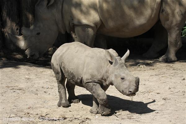 Zoo_Dortmund_190714_copy_Heike_Weiler_IMG_2667