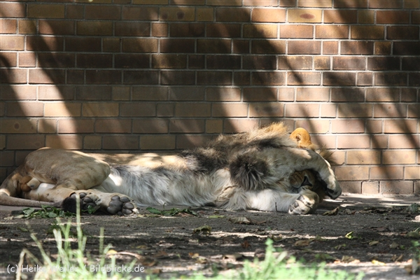 Zoo_Dortmund_190714_copy_Heike_Weiler_IMG_2696