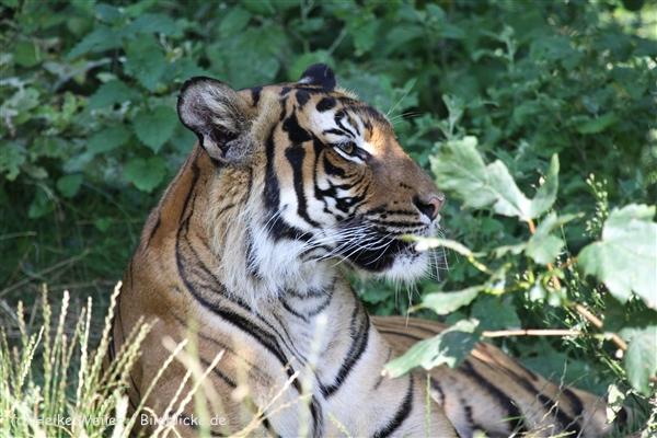 Zoo_Dortmund_190714_copy_Heike_Weiler_IMG_2702