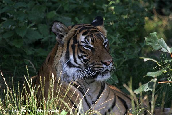 Zoo_Dortmund_190714_copy_Heike_Weiler_IMG_2717