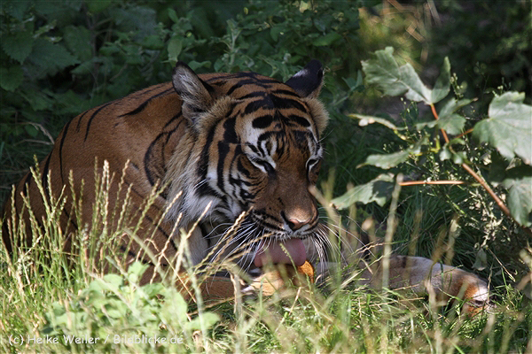 Zoo_Dortmund_190714_copy_Heike_Weiler_IMG_2726