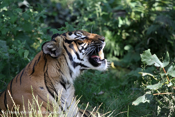 Zoo_Dortmund_190714_copy_Heike_Weiler_IMG_2736