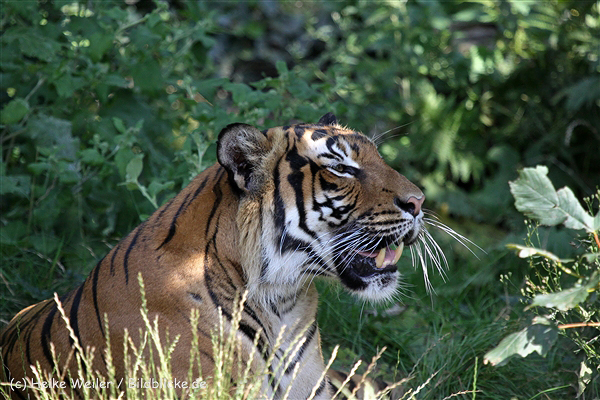 Zoo_Dortmund_190714_copy_Heike_Weiler_IMG_2752