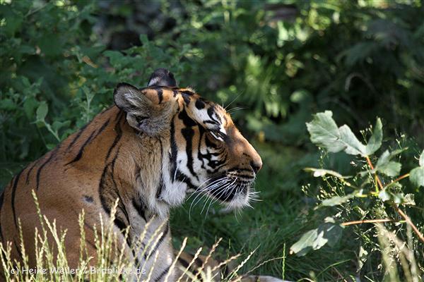 Zoo_Dortmund_190714_copy_Heike_Weiler_IMG_2756