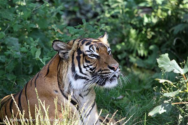 Zoo_Dortmund_190714_copy_Heike_Weiler_IMG_2757