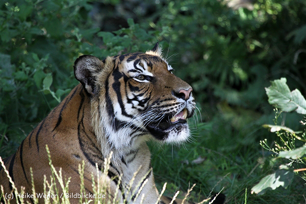 Zoo_Dortmund_190714_copy_Heike_Weiler_IMG_2772