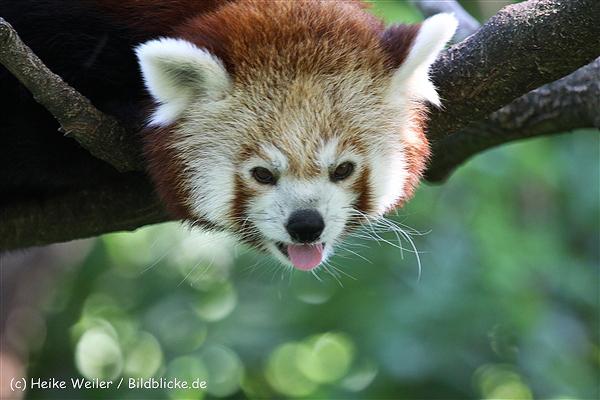 Zoo_Dortmund_190714_copy_Heike_Weiler_IMG_2782