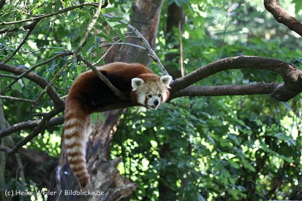 Zoo_Dortmund_190714_copy_Heike_Weiler_IMG_2791