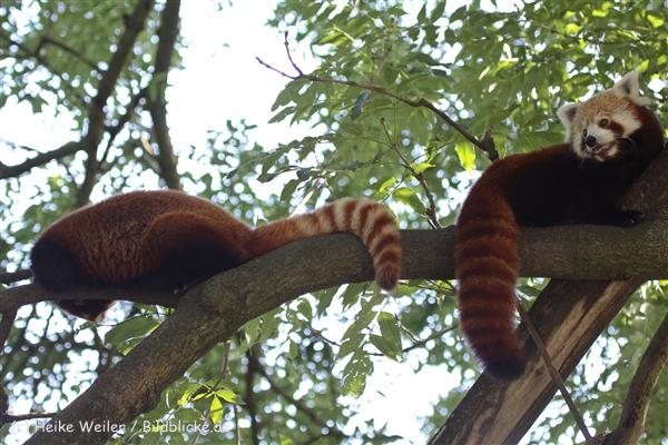 Zoo_Dortmund_190714_copy_Heike_Weiler_IMG_2809