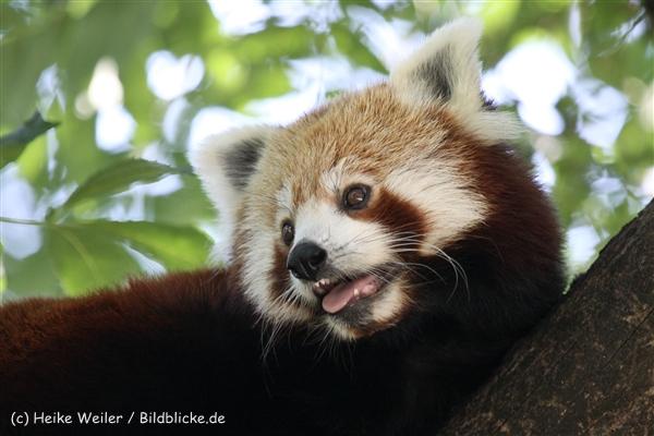 Zoo_Dortmund_190714_copy_Heike_Weiler_IMG_2811