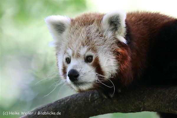 Zoo_Dortmund_190714_copy_Heike_Weiler_IMG_2826