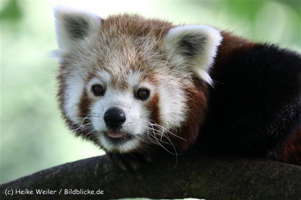 Zoo_Dortmund_190714_copy_Heike_Weiler_IMG_2831