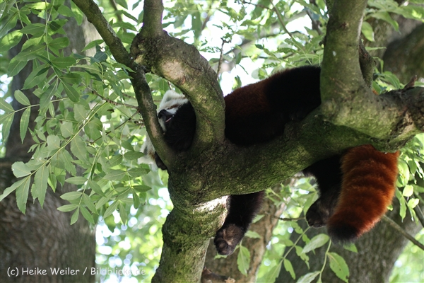 Zoo_Dortmund_190714_copy_Heike_Weiler_IMG_2838