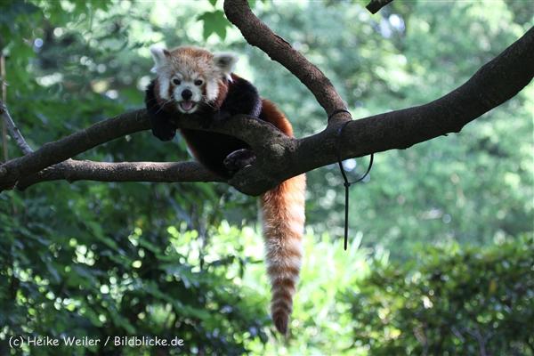 Zoo_Dortmund_190714_copy_Heike_Weiler_IMG_2847