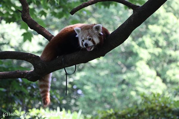 Zoo_Dortmund_190714_copy_Heike_Weiler_IMG_2853