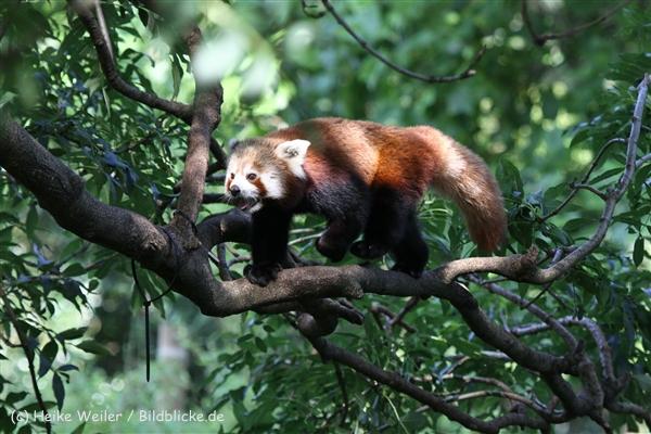 Zoo_Dortmund_190714_copy_Heike_Weiler_IMG_2859
