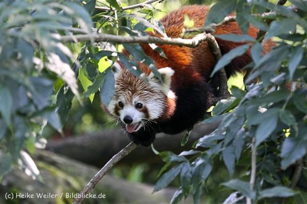 Zoo_Dortmund_190714_copy_Heike_Weiler_IMG_2863