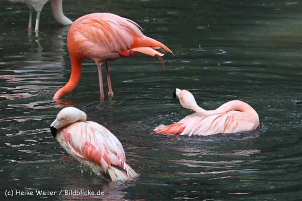 Zoo_Dortmund_190714_copy_Heike_Weiler_IMG_2872