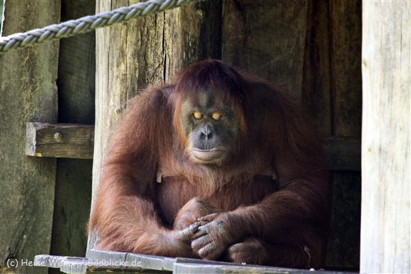 Zoo_Dortmund_190714_copy_Heike_Weiler_IMG_2875