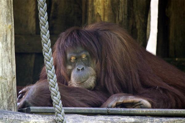 Zoo_Dortmund_190714_copy_Heike_Weiler_IMG_2877