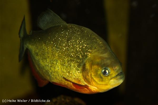 Zoo Dortmund 310711- IMG_3631
