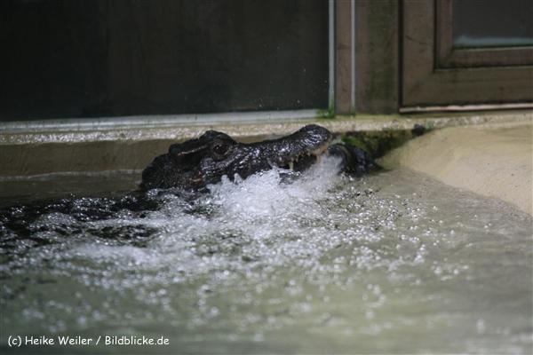 Zoo Dortmund 310711- IMG_3652