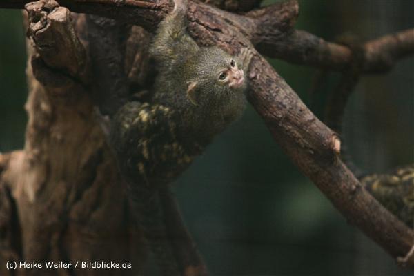 Zoo Dortmund 310711- IMG_3658