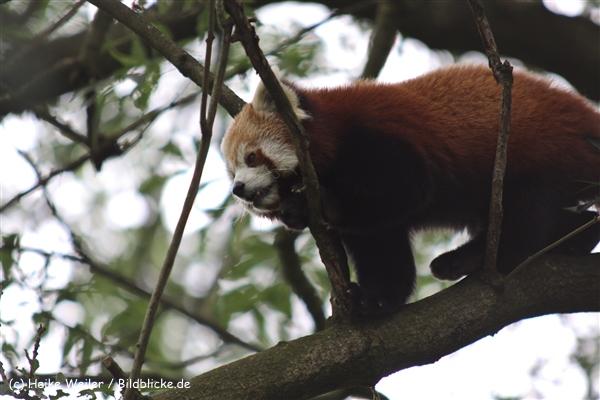 Zoo Dortmund 310711- IMG_3678