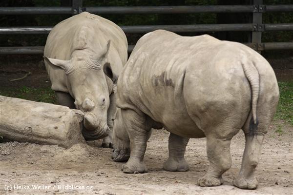 Zoo Dortmund 310711- IMG_3789