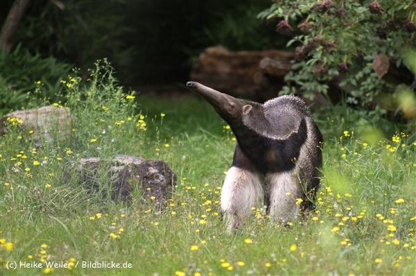 Zoo Dortmund 310711- IMG_3803