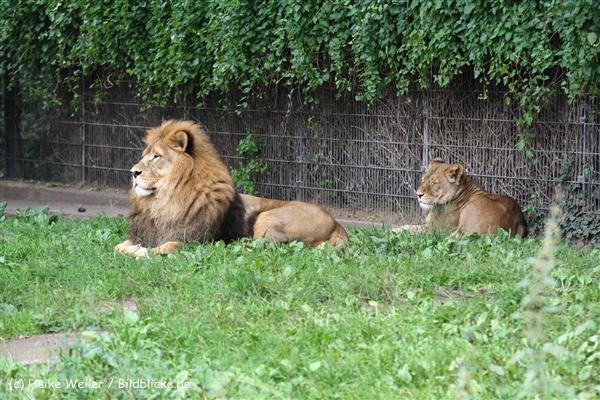 Zoo Dortmund 310711- IMG_3814