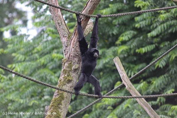 Zoo Dortmund 310711- IMG_3825