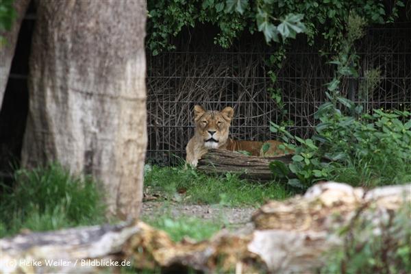 Zoo Dortmund 310711- IMG_3829
