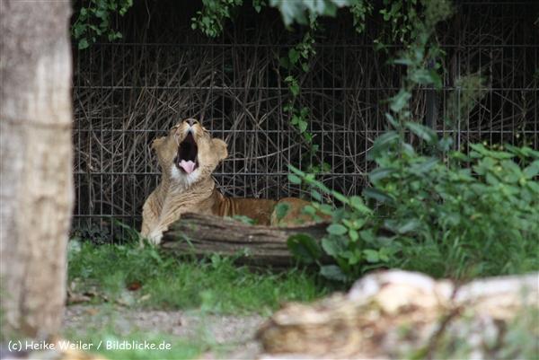 Zoo Dortmund 310711- IMG_3832