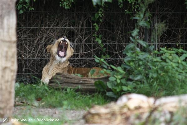 Zoo Dortmund 310711- IMG_3834