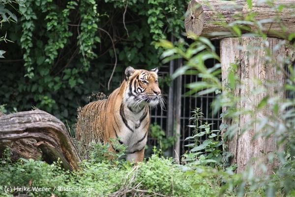 Zoo Dortmund 310711- IMG_3838
