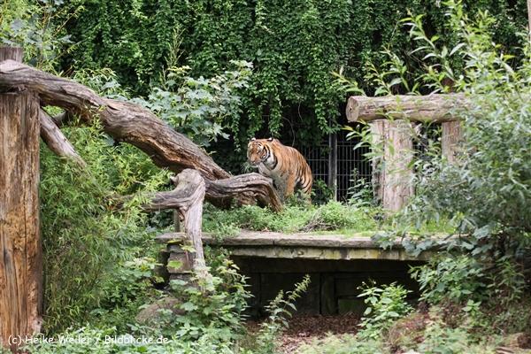 Zoo Dortmund 310711- IMG_3842