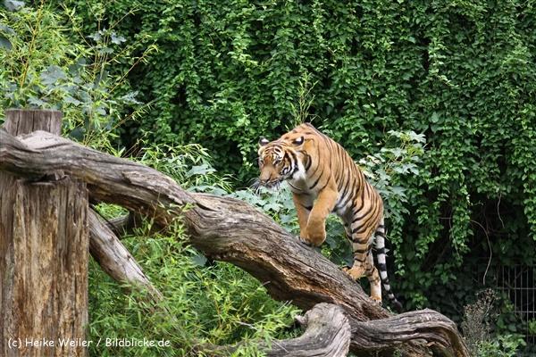 Zoo Dortmund 310711- IMG_3844