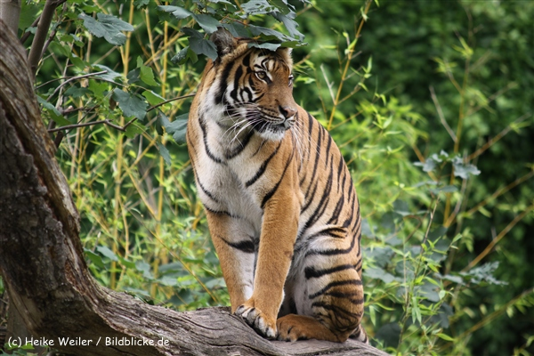 Zoo Dortmund 310711- IMG_3858