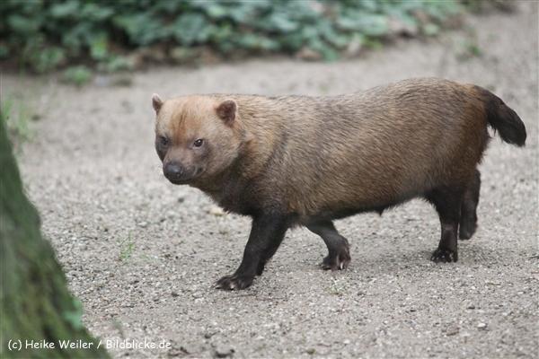 Zoo Dortmund 310711- IMG_3875