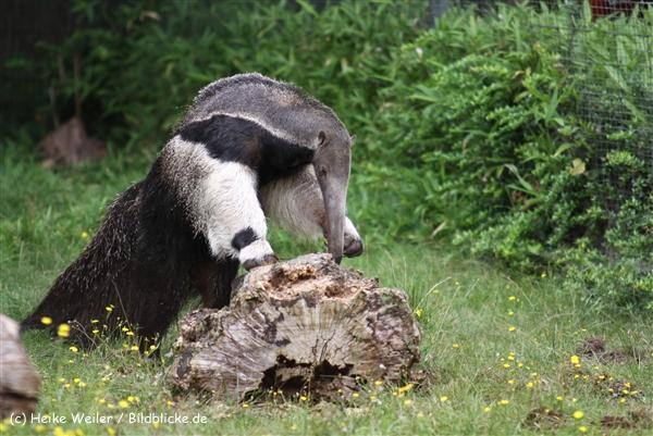 Zoo Dortmund 310711- IMG_3878