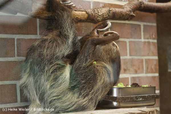 Zoo Dortmund 310711- IMG_3889