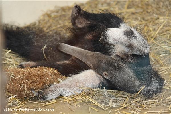 Zoo Dortmund 310711- IMG_3891